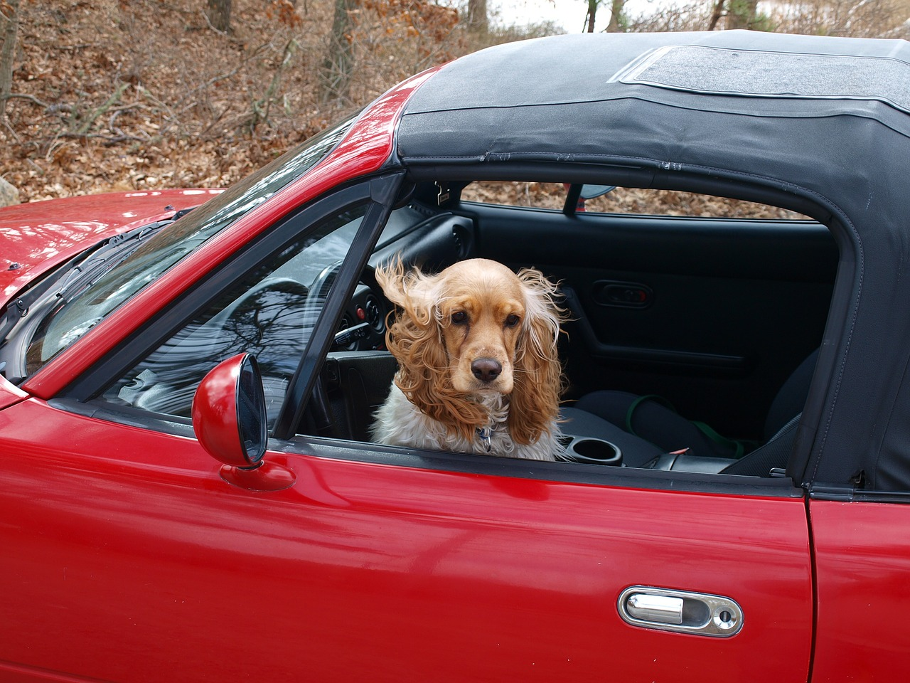 Driving with a Dog Tips