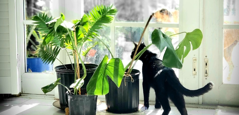 Poison plats for cats