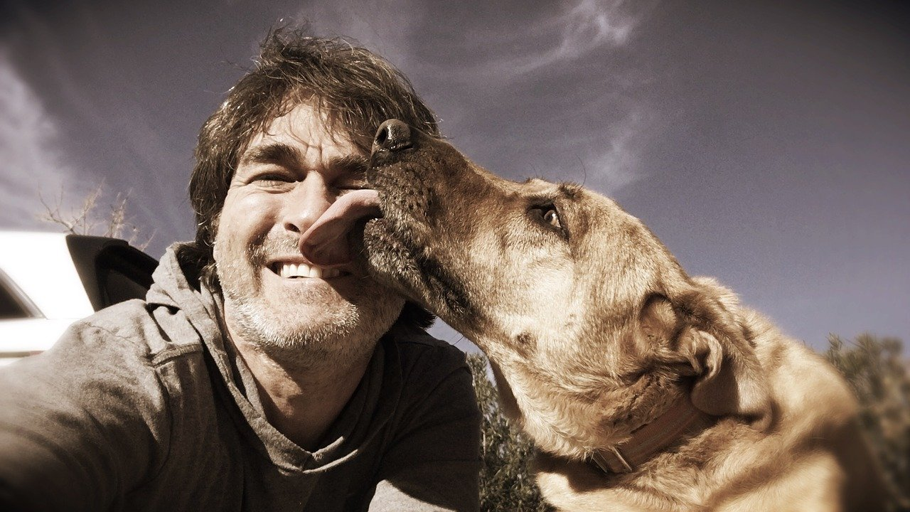 5 reasons why dogs lick their owners