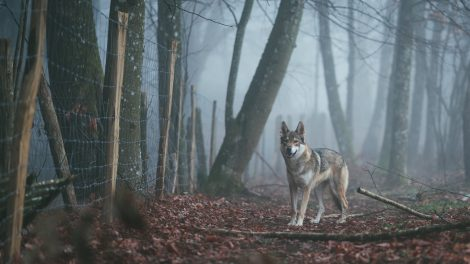 6 Best Guard Dog Breeds for Families