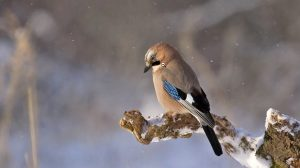 The 7 most popular domestic birds